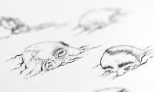 Detail of Casey Sorrow's illustration for 'The Staves of Memory'.